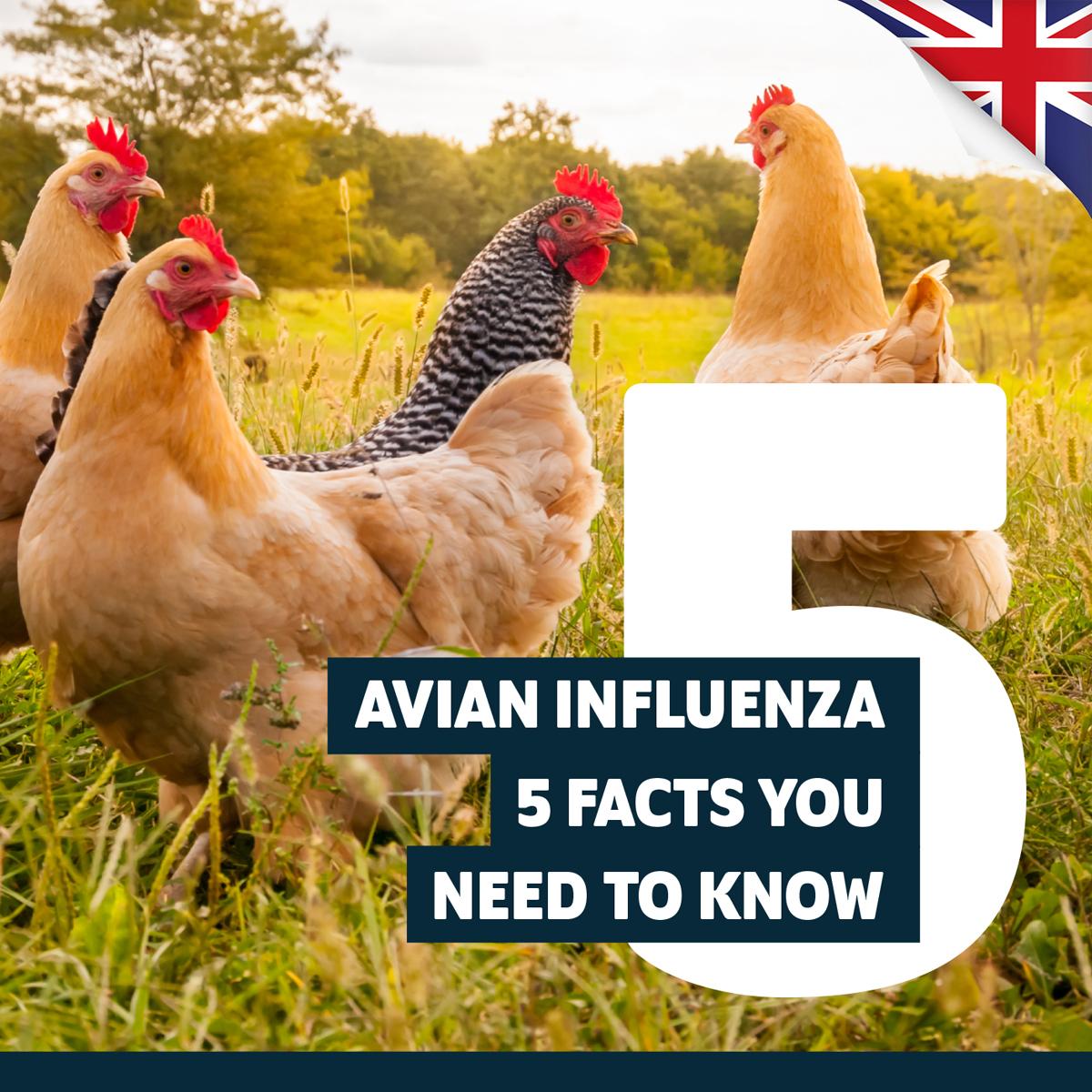 Avian Influenza – Top 5 Facts